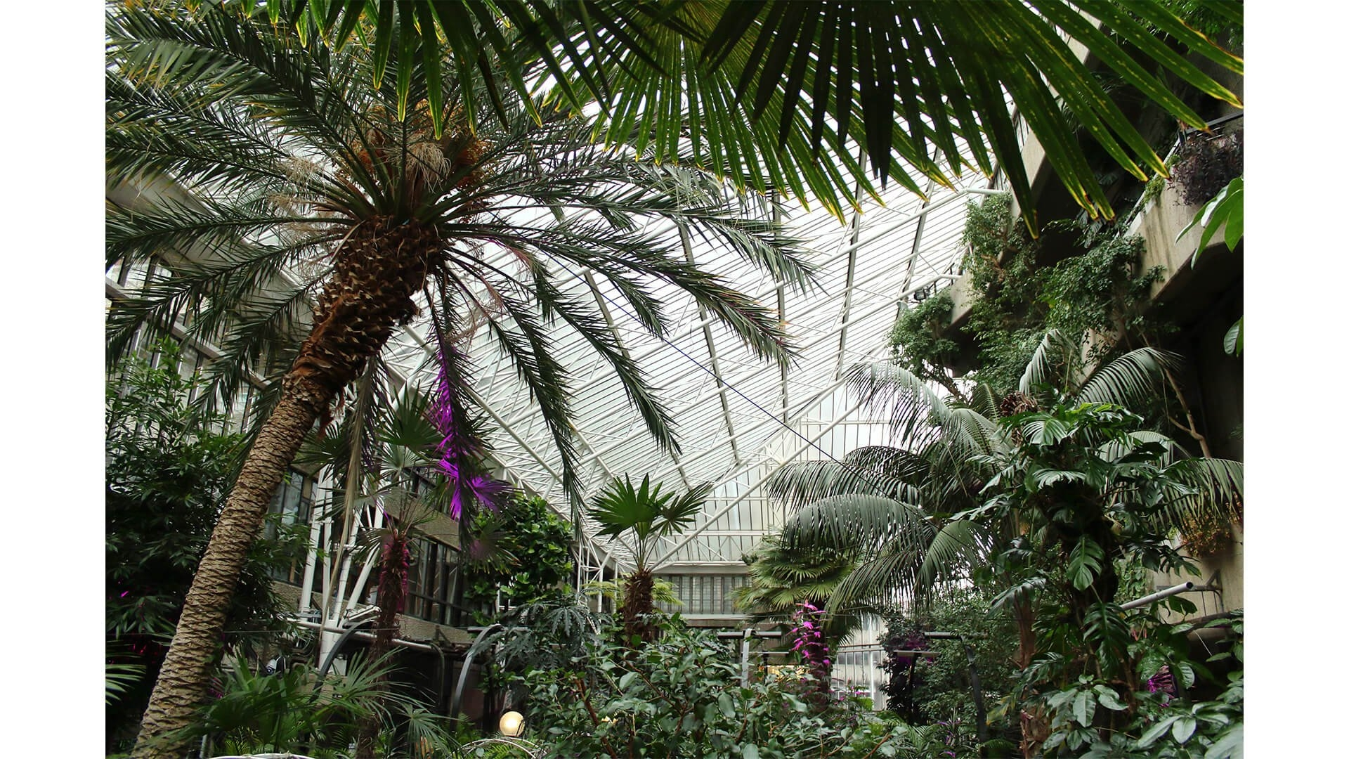 A leafy morning at the Barbican Conservatory provides inspiration for the next paper set